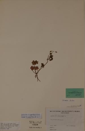 (Geranium lucidum - H611530)  @11 [ ] Unspecified (default): All Rights Reserved  Unspecified Unspecified