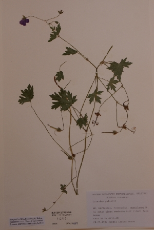 (Geranium palustre - H722790)  @11 [ ] Unspecified (default): All Rights Reserved  Unspecified Unspecified