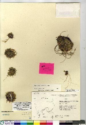 (Sagina - McLaren_142_CAN)  @11 [ ] Copyright (2011) Canadian Museum of Nature Canadian Museum of Nature