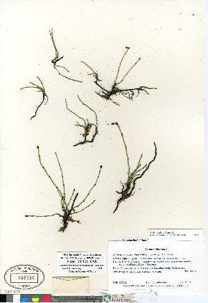 ( - Aiken_04-106_CAN)  @11 [ ] Copyright (2011) Canadian Museum of Nature Canadian Museum of Nature