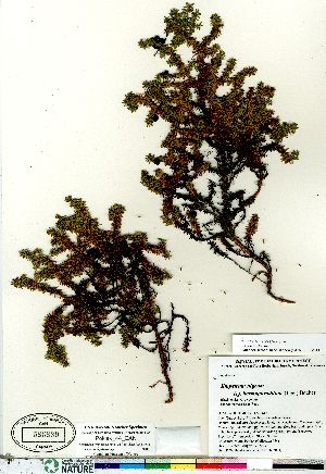 ( - Pokiak_44_CAN)  @11 [ ] Copyright (2011) Canadian Museum of Nature Canadian Museum of Nature