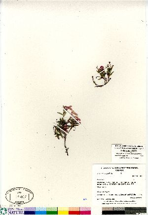 (Andromeda - Gillespie_8575)  @11 [ ] Copyright (2011) Canadian Museum of Nature Canadian Museum of Nature