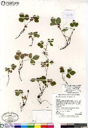 (Cylactis - Saarela_1549_CAN)  @11 [ ] Copyright (2012) Canadian Museum of Nature Canadian Museum of Nature