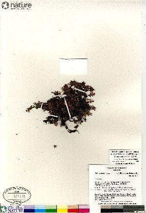 (Kalmia - Consaul_3514_CAN)  @11 [ ] Copyright (2012) Canadian Museum of Nature Canadian Museum of Nature