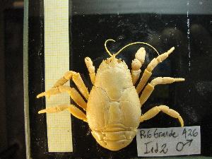 (Macrobrachium borellii - 14GTFG-0037)  @11 [ ] c (2011) Unspecified Instituto Nacional del Limnología (INALI-CONICET-UNL)