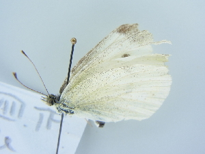 ( - BC ZSM Lep 78991)  @13 [ ] Unspecified (default): All Rights Reserved  Unspecified Unspecified