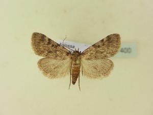 ( - BC ZSM Lep 91400)  @11 [ ] by-nc-sa (2016) SNSB, Staatliche Naturwissenschaftliche Sammlungen Bayerns ZSM (SNSB, Zoologische Staatssammlung Muenchen)