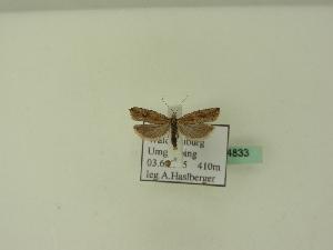 ( - BC ZSM Lep 94833)  @11 [ ] by-nc-sa (2223) SNSB, Staatliche Naturwissenschaftliche Sammlungen Bayerns ZSM (SNSB, Zoologische Staatssammlung Muenchen)