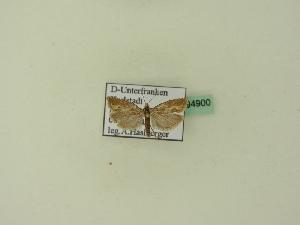 ( - BC ZSM Lep 94900)  @11 [ ] by-nc-sa (2016) SNSB, Staatliche Naturwissenschaftliche Sammlungen Bayerns ZSM (SNSB, Zoologische Staatssammlung Muenchen)