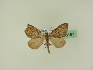 ( - BC ZSM Lep 95197)  @11 [ ] by-nc-sa (2777) SNSB, Staatliche Naturwissenschaftliche Sammlungen Bayerns ZSM (SNSB, Zoologische Staatssammlung Muenchen)