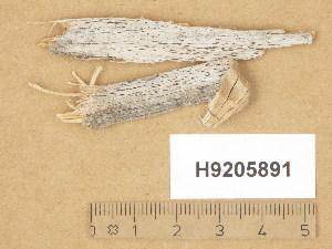 (Lecanoromycetes - H9205891)  @11 [ ] Copyright (2014) Diana Weckman Botanical Museum, Finnish Museum of Natural History, University of Helsinki