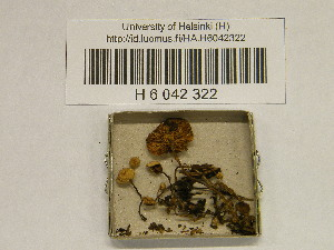 (Pseudobaeospora - H6042322)  @11 [ ] CreativeCommons - Attribution Non-Commercial Share-Alike (2013) Balint Dima Botanical Museum, Finnish Museum of Natural History, University of Helsinki