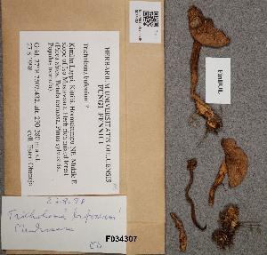 (Tricholoma cf. bufonium - OULU.0035433)  @11 [ ] CreativeCommons - Attribution Non-Commercial (2012) Anna L. Ruotsalainen University of Oulu