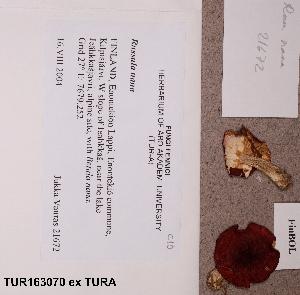 (Russula nana - TUR163070)  @11 [ ] CreativeCommons - Attribution Non-Commercial (2012) Anna L. Ruotsalainen University of Oulu