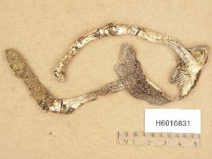 (Tricholoma sudum - H6010831)  @11 [ ] Copyright (2013) Diana Weckman Botanical Museum, Finnish Museum of Natural History, University of Helsinki