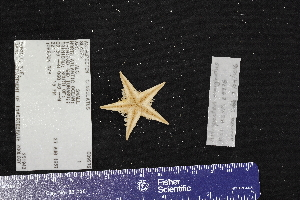 (Astropecten marginatus - USNM E09976)  @11 [ ] by-nc-sa (2017) Unspecified Fish and Wildlife Research Institute