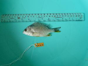 ( - SCSIO-Fish-Z711027)  @14 [ ] Unspecified (default): All Rights Reserved  Unspecified Unspecified