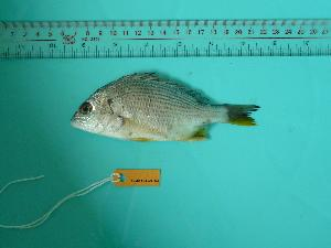 ( - SCSIO-Fish-Z711028)  @13 [ ] Unspecified (default): All Rights Reserved  Unspecified Unspecified