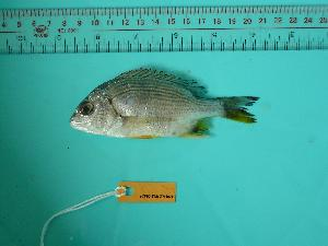 ( - SCSIO-Fish-Z711029)  @12 [ ] Unspecified (default): All Rights Reserved  Unspecified Unspecified