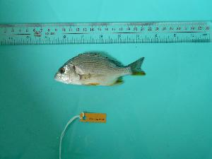 ( - SCSIO-Fish-Z711033)  @12 [ ] Unspecified (default): All Rights Reserved  Unspecified Unspecified