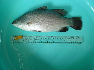 ( - SCSIO-Fish-Z711060)  @13 [ ] Unspecified (default): All Rights Reserved  Unspecified Unspecified