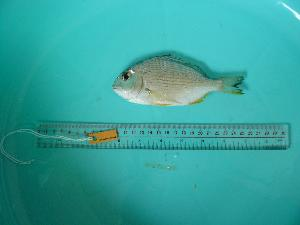 ( - SCSIO-Fish-Z711066)  @11 [ ] Unspecified (default): All Rights Reserved  Unspecified Unspecified