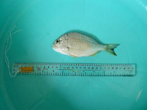 ( - SCSIO-Fish-Z711068)  @11 [ ] Unspecified (default): All Rights Reserved  Unspecified Unspecified