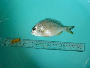( - SCSIO-Fish-Z711069)  @11 [ ] Unspecified (default): All Rights Reserved  Unspecified Unspecified