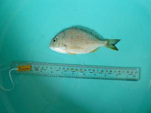 ( - SCSIO-Fish-Z711070)  @11 [ ] Unspecified (default): All Rights Reserved  Unspecified Unspecified