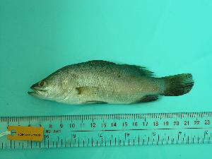 ( - SCSIO-Fish-Z711170)  @13 [ ] Unspecified (default): All Rights Reserved  Unspecified Unspecified