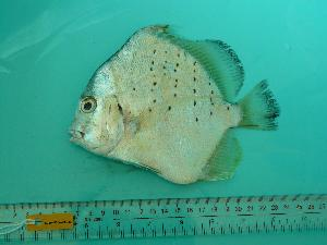 (Moroniformes - SCSIO-Fish-Z711181)  @15 [ ] Unspecified (default): All Rights Reserved  Unspecified Unspecified