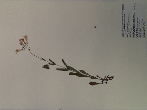 ( - SEBB-959)  @11 [ ] Copyright (2012) John Barone Columbus State University