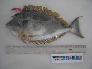 ( - F006-1)  @13 [ ] Copyright (2010) Mauritius Oceanography Institute Mauritius Oceanography Institute