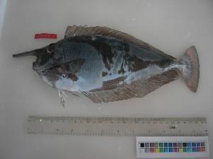 ( - F007-1)  @12 [ ] Copyright (2010) Mauritius Oceanography Institute Mauritius Oceanography Institute