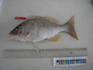 ( - F014-1)  @12 [ ] Copyright (2010) Mauritius Oceanography Institute Mauritius Oceanography Institute