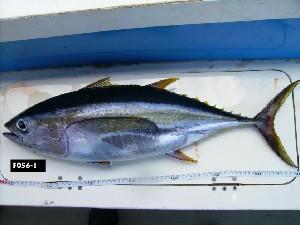 ( - F056-1)  @14 [ ] Copyright (2010) Mauritius Oceanography Institute Mauritius Oceanography Institute