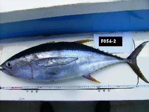 ( - F056-2)  @14 [ ] Copyright (2010) Mauritius Oceanography Institute Mauritius Oceanography Institute