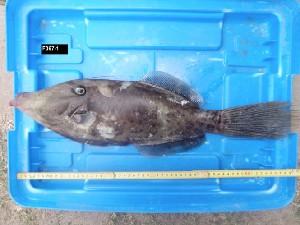 ( - F067-1)  @12 [ ] Copyright (2011) Ruby Moothien Pillay Mauritius Oceanography Institute