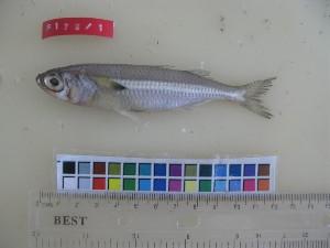 ( - F178-1)  @13 [ ] Copyright (2011) Mauritius Oceanography Institute Mauritius Oceanography Institute