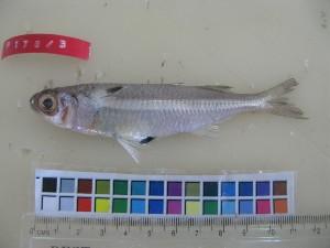 ( - F178-3)  @12 [ ] Copyright (2011) Mauritius Oceanography Institute Mauritius Oceanography Institute
