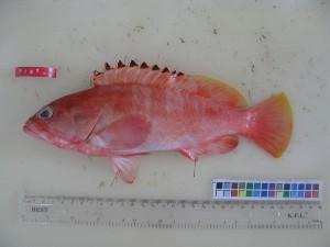 ( - F187-1)  @13 [ ] Copyright (2011) Mauritius Oceanography Institute Mauritius Oceanography Institute