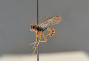 ( - BC ZSM HYM 14189)  @11 [ ] by-nc-sa (2014) Stefan Schmidt ZSM (Zoologische Staatssammlung Muenchen)