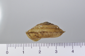 (Aegista - SDNCU-A1067)  @14 [ ] Copyright (2014) Unspecified Specimen depository of the Graduate School of Natural Sciences, Nagoya City University