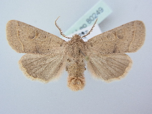 ( - BC ZSM Lep 80249)  @11 [ ] Unspecified (default): All Rights Reserved  Unspecified Unspecified