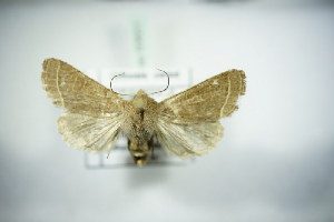 ( - BC ZSM Lep 83651)  @11 [ ] Unspecified (default): All Rights Reserved  Unspecified Unspecified