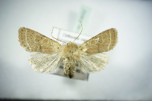( - BC ZSM Lep 83652)  @11 [ ] Unspecified (default): All Rights Reserved  Unspecified Unspecified