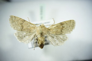 ( - BC ZSM Lep 83653)  @11 [ ] Unspecified (default): All Rights Reserved  Unspecified Unspecified