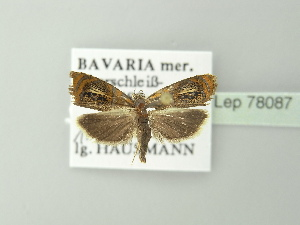 ( - BC ZSM Lep 78087)  @11 [ ] Copyright (2014) Axel Hausmann/Bavarian State Collection of Zoology (ZSM) Bavarian State Collection of Zoology
