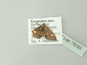 ( - BC ZSM Lep 78293)  @11 [ ] Copyright (2014) Axel Hausmann/Bavarian State Collection of Zoology (ZSM) Bavarian State Collection of Zoology