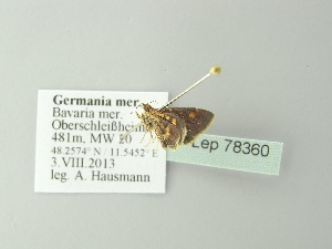 ( - BC ZSM Lep 78360)  @12 [ ] Copyright (2014) Axel Hausmann/Bavarian State Collection of Zoology (ZSM) Bavarian State Collection of Zoology